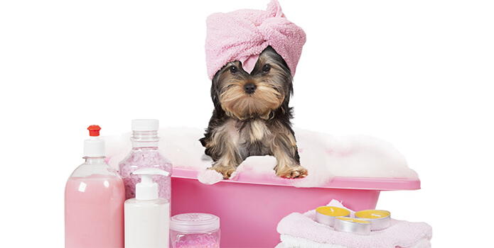 5 Ways to Pamper Your Dog