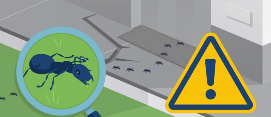 How to Make Sure You Avoid Ants in Your Home