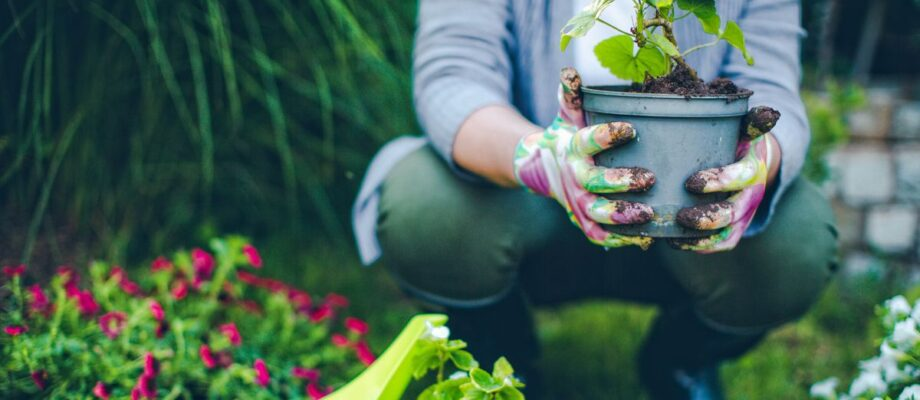 Why Gardening Is Healthy