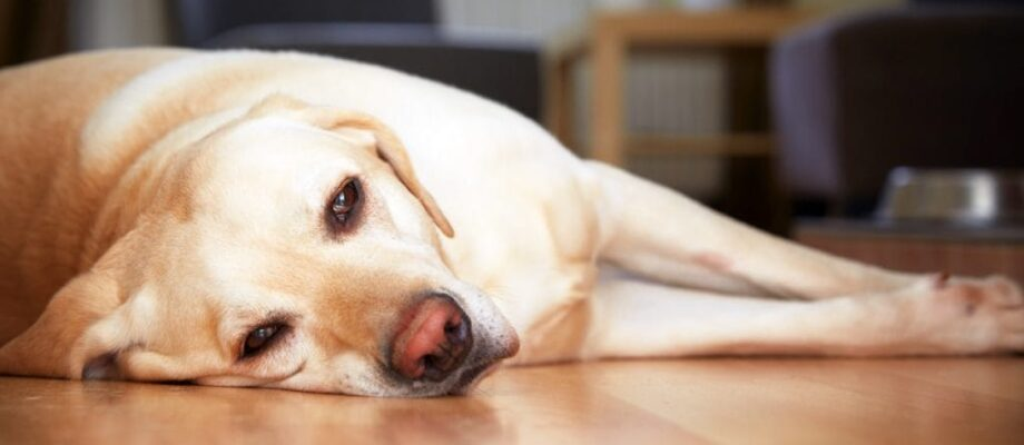 Is Your Dog Ill? 3 Signs to Watch Out For